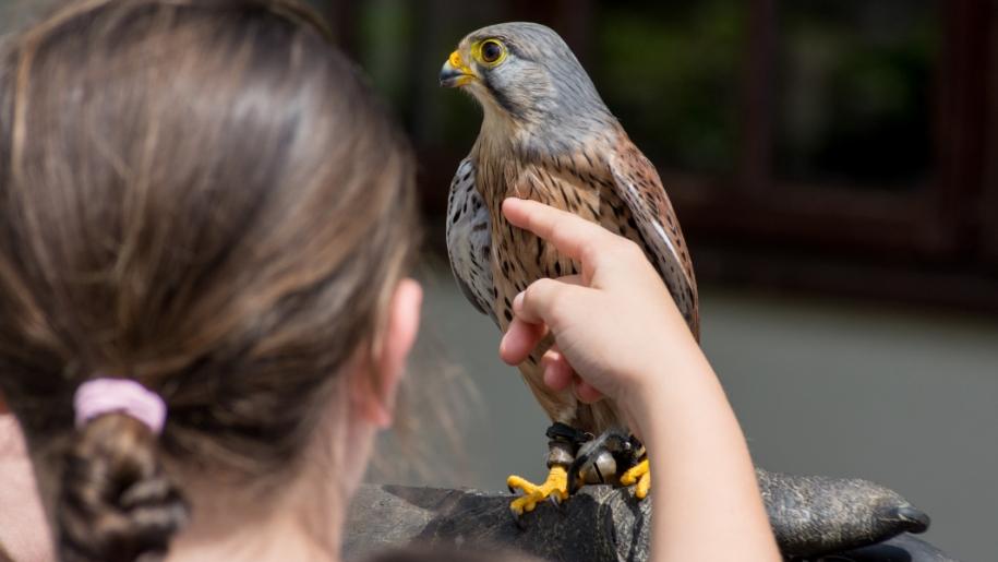 girl stroking bird