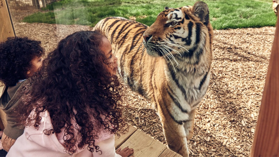 girl looking at tiger