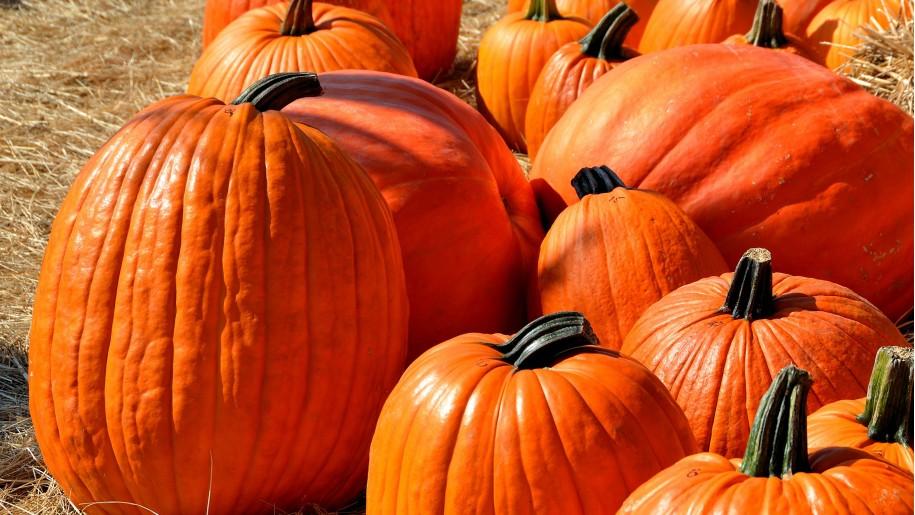 farm pumpkins