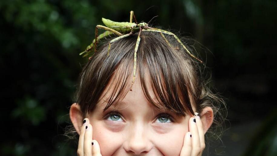 bug on head