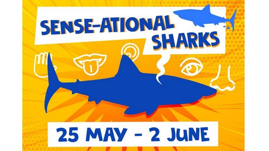 shark deep event