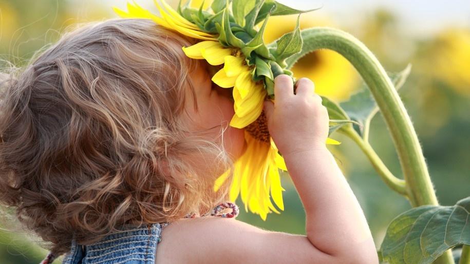 sunflower and little girl