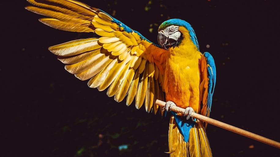 pixabay parrot