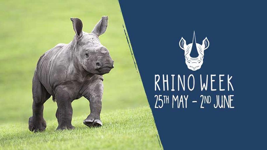 west midlands, rhino, safari