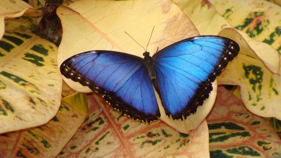 lakeland wildlife butterfly