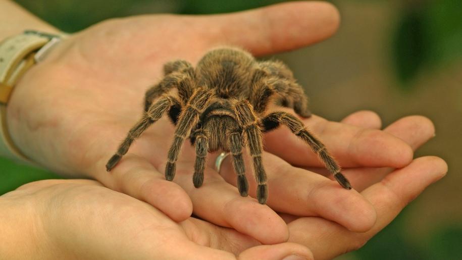 lakeland wildlife spider