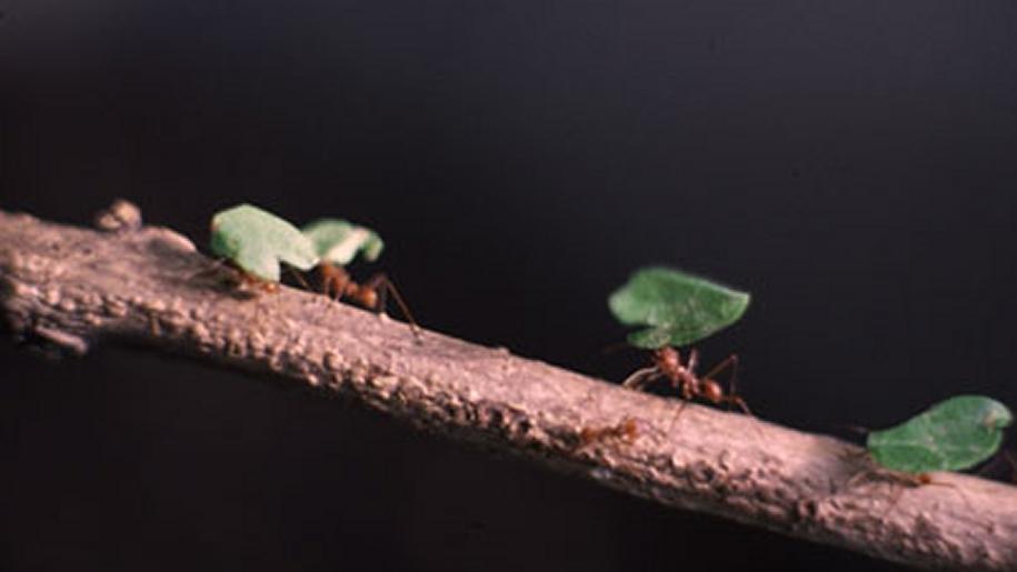 lakeland wildlife ants