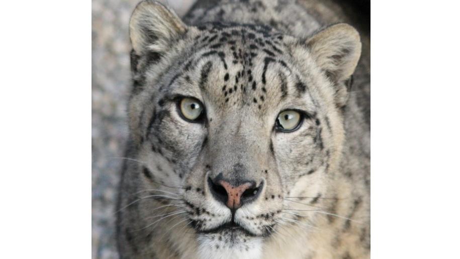 lakeland wildlife tiger