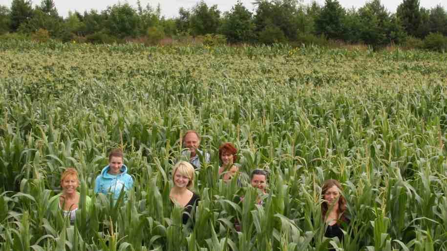 drayton maize