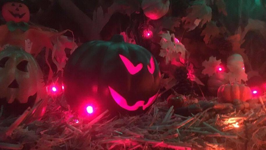 pumpkins at godstone farm