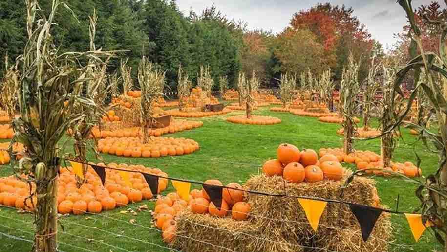 wheelgate theme park pumpkin field