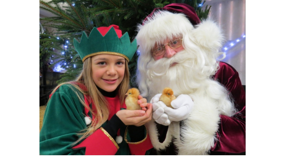 Santa and girl dressed as elf holding duckings