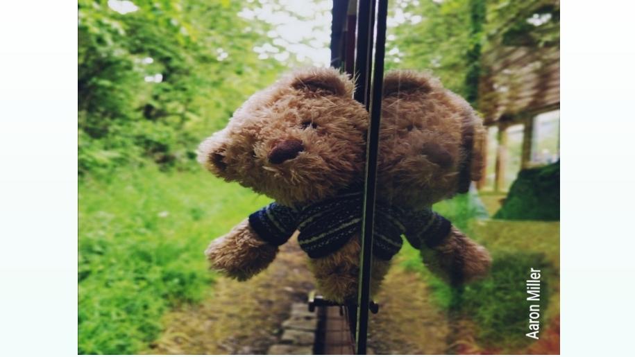 teddy peering from window of train ride