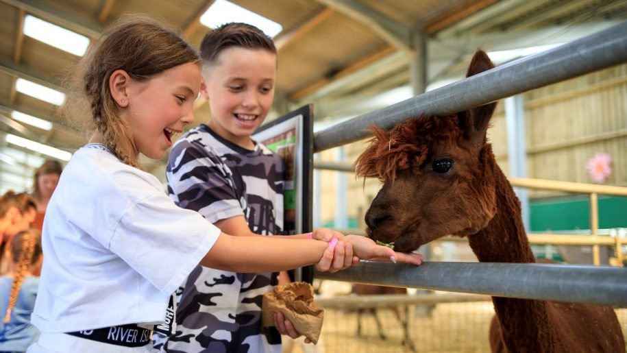 kids feeding alpacas at Bocketts Farm Park