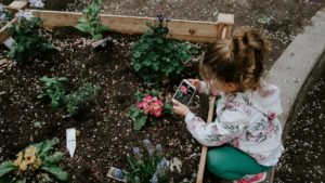 gardening to see the insects
