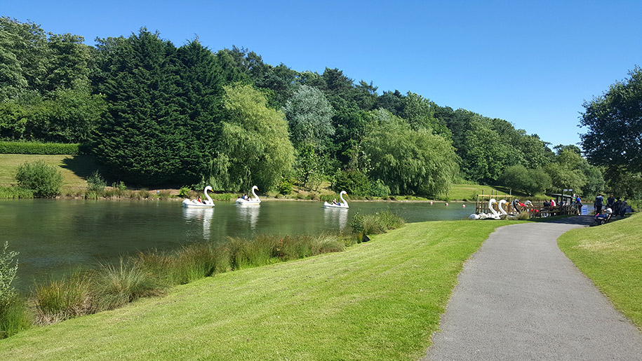 swan boats at Lightwater Valley