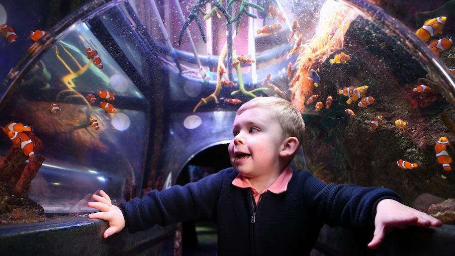 boy in underwater tunnel at Sealife