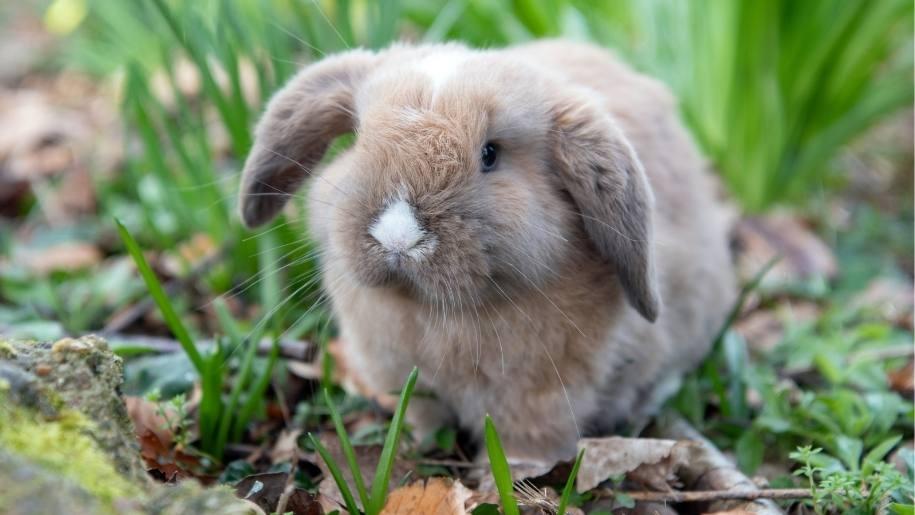cute baby bunny at Godstone Farm