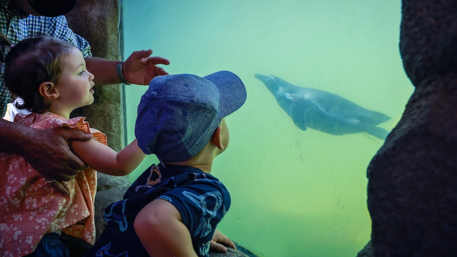 children looking at penguins at Marwell Zoo